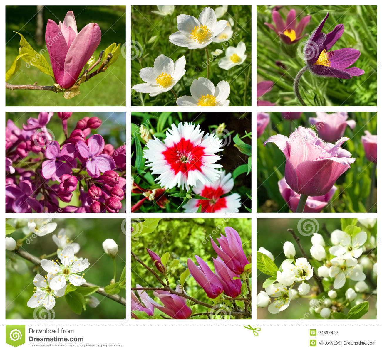 Collection Of Different Spring Flowers Stock Photo Image Of Tulips