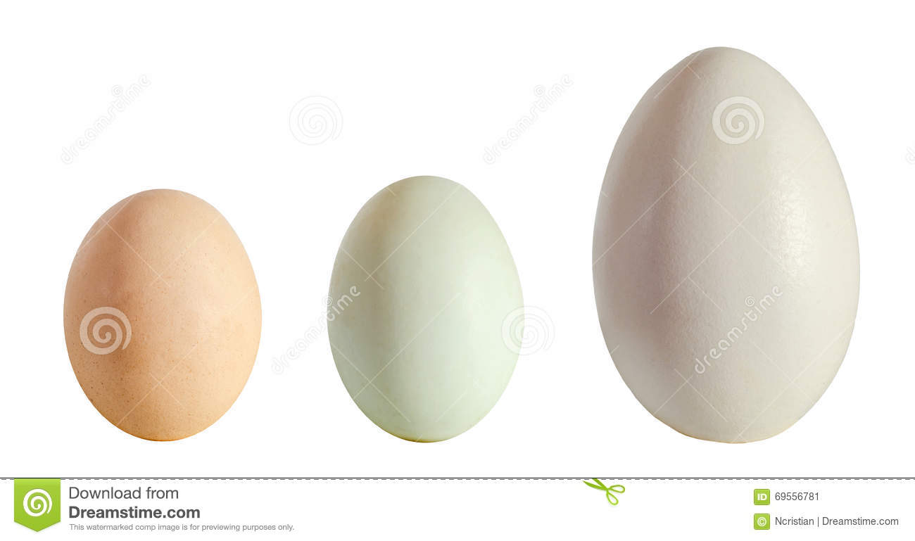 Collection of eggs, large white goose egg, light green duck egg, light brown chicken egg, isolated on white background, close up