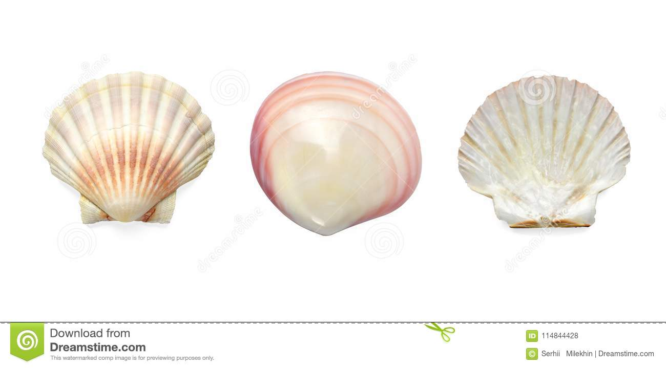 Collection Exotic conch isolated on white background