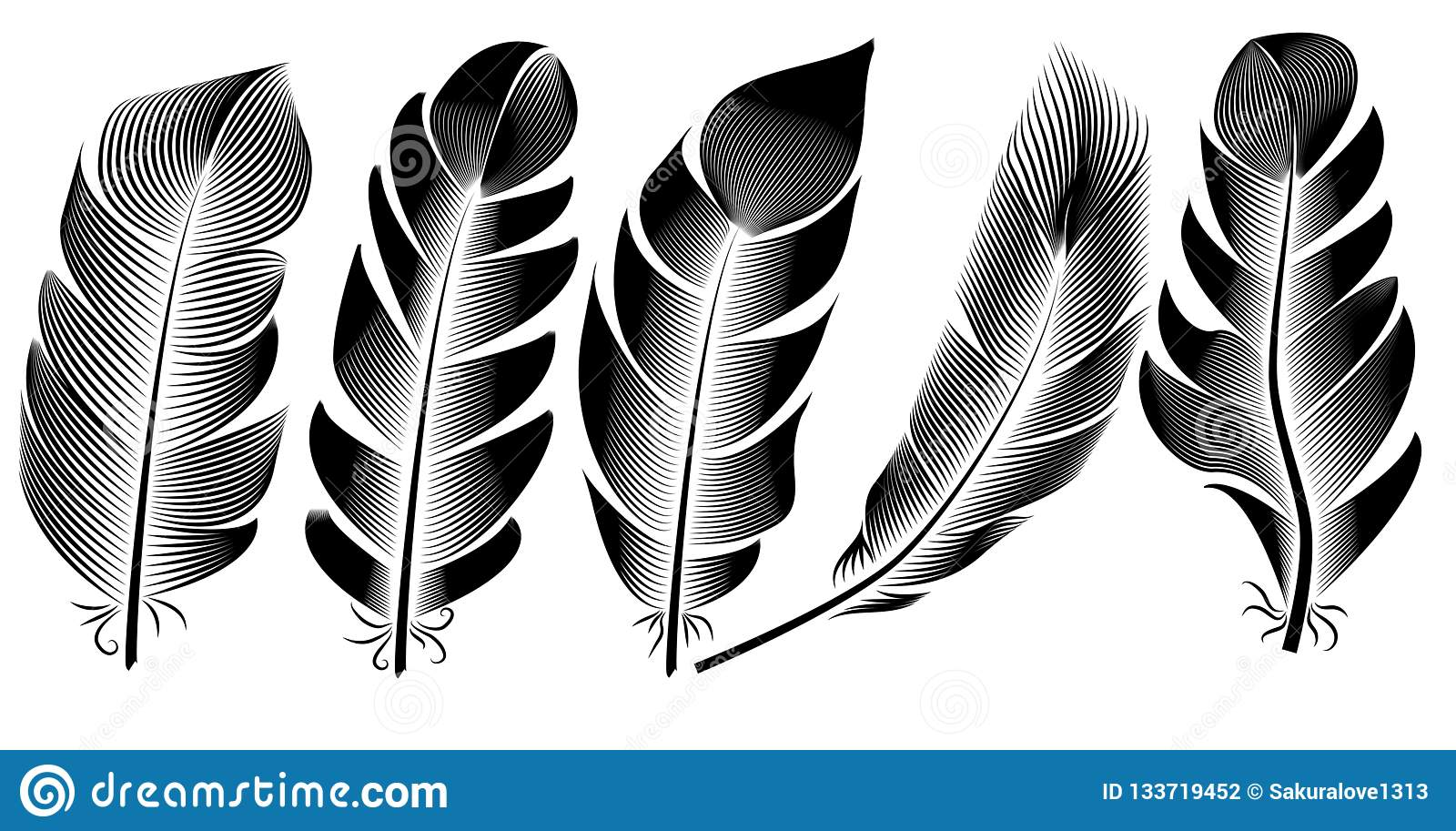 Collection of feather illustration, drawing, engraving, ink, line art