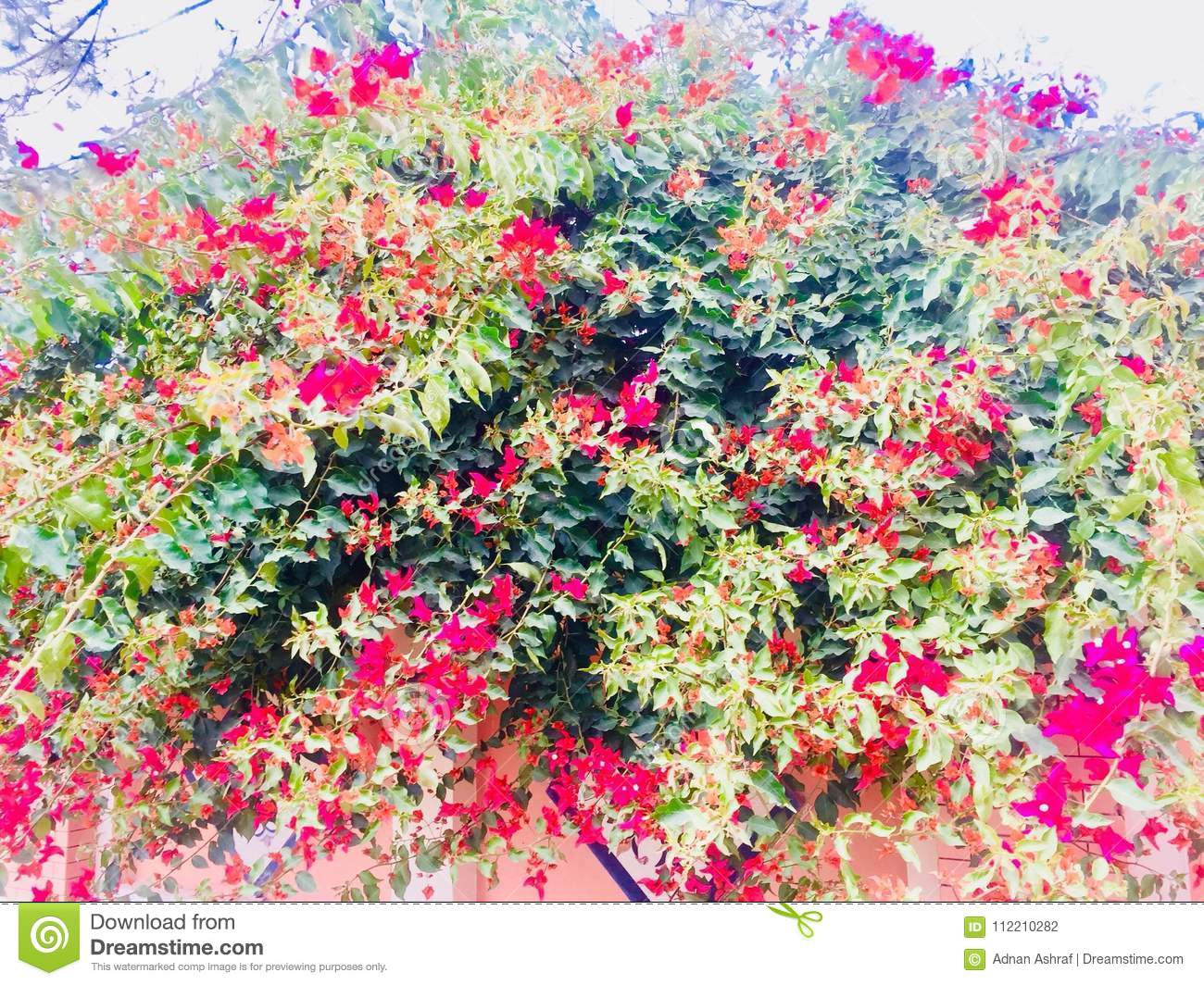 Spring And Summer Seasons Flower Plants Beauty Stock Photo Image