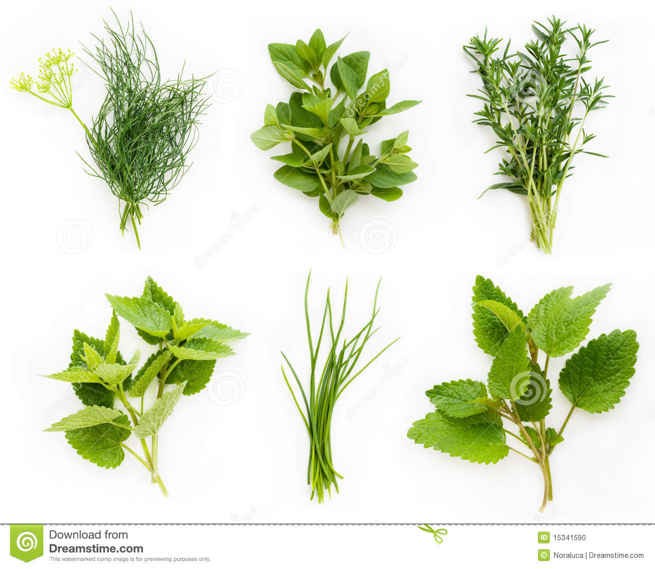 Collection of fresh herbs