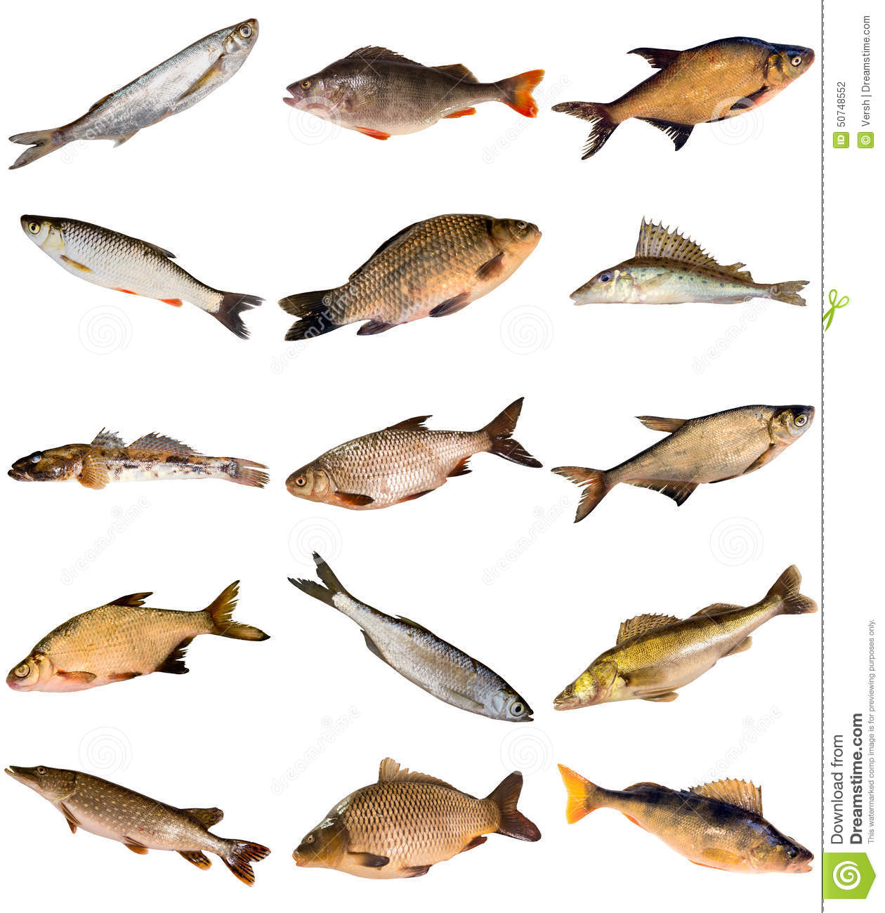 Collection Of Fresh Water Fish Stock Photo Image 50748552