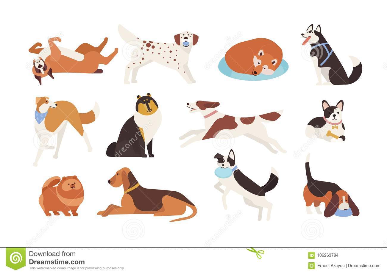 Collection of funny dogs of various breeds playing, sleeping, lying, sitting. Set of cute and amusing cartoon pet