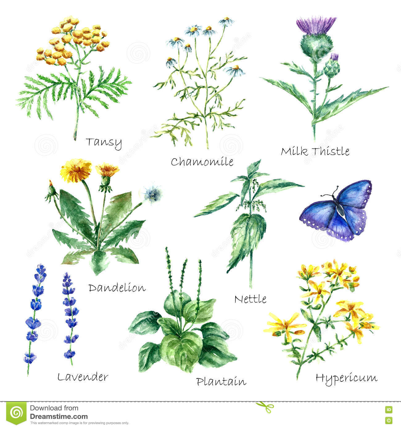Collection Of Hand Drawn Medical Herbs And Plants. Stock Vector ...