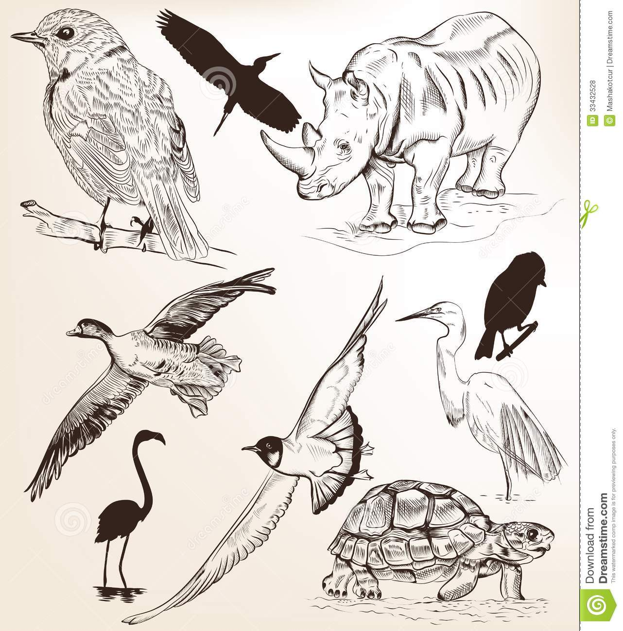 Uncategorized Drawn Pictures Of Animals collection of hand drawn vector detailed animals for design royalty free stock photo