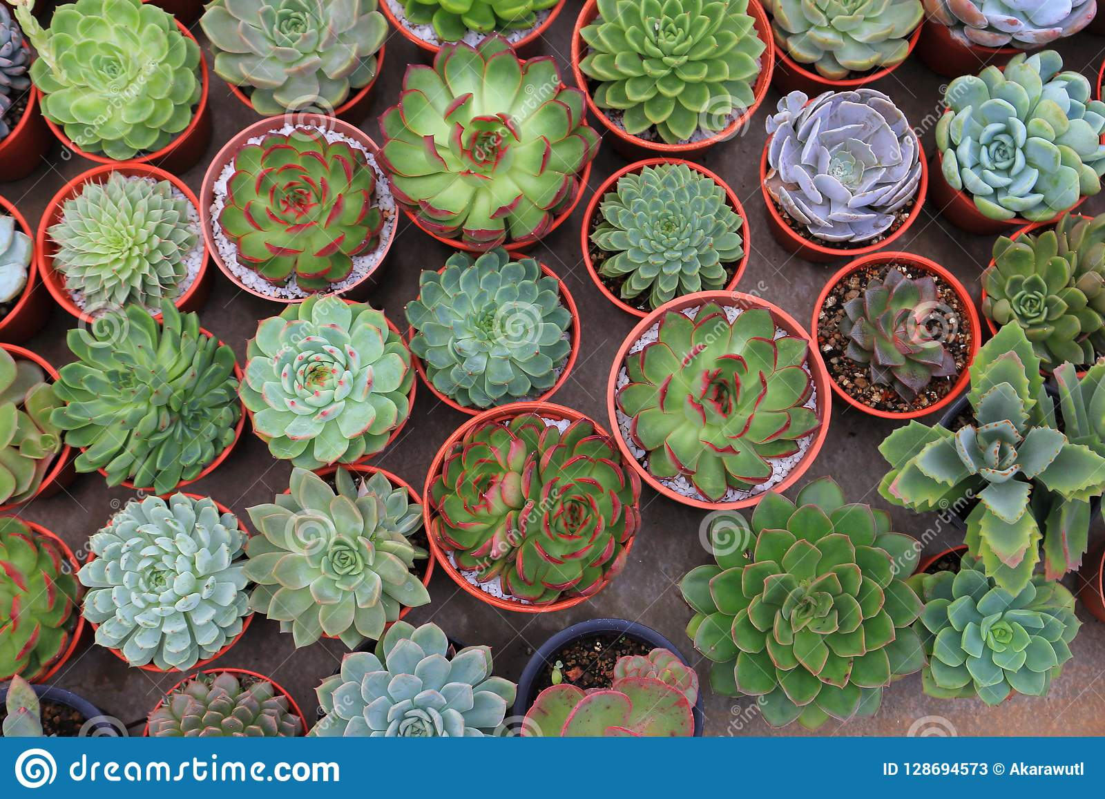 Collection Of Healthy Decorative Succulent In The Greenhouse Garden For Limited  Space Urban Gardening Design