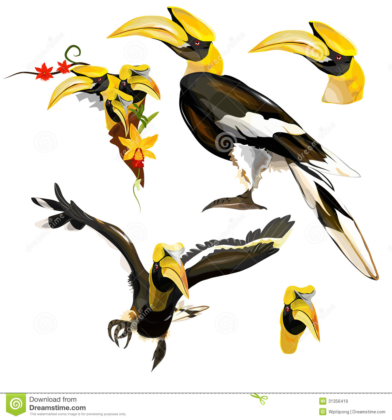 Collection Of Hornbill Royalty Free Stock Images Image 31356419