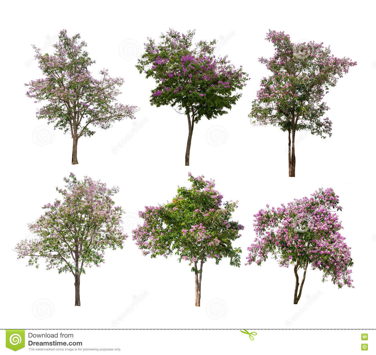Collection Of Isolated Trees With Purple Flowers On White Backgroud