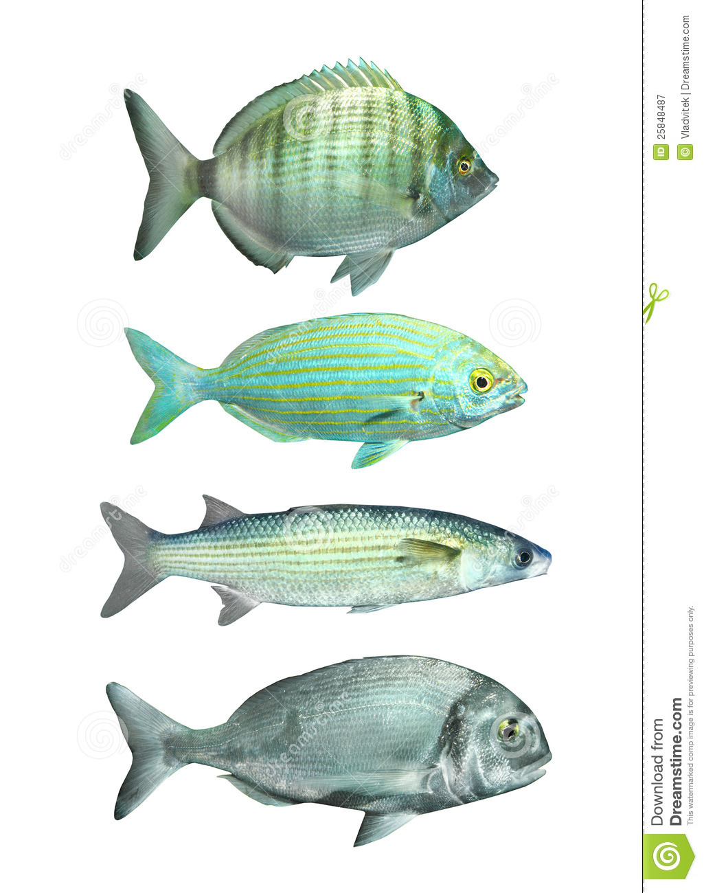 Collection of a mediterranean fish stock illustration for Photos of fish