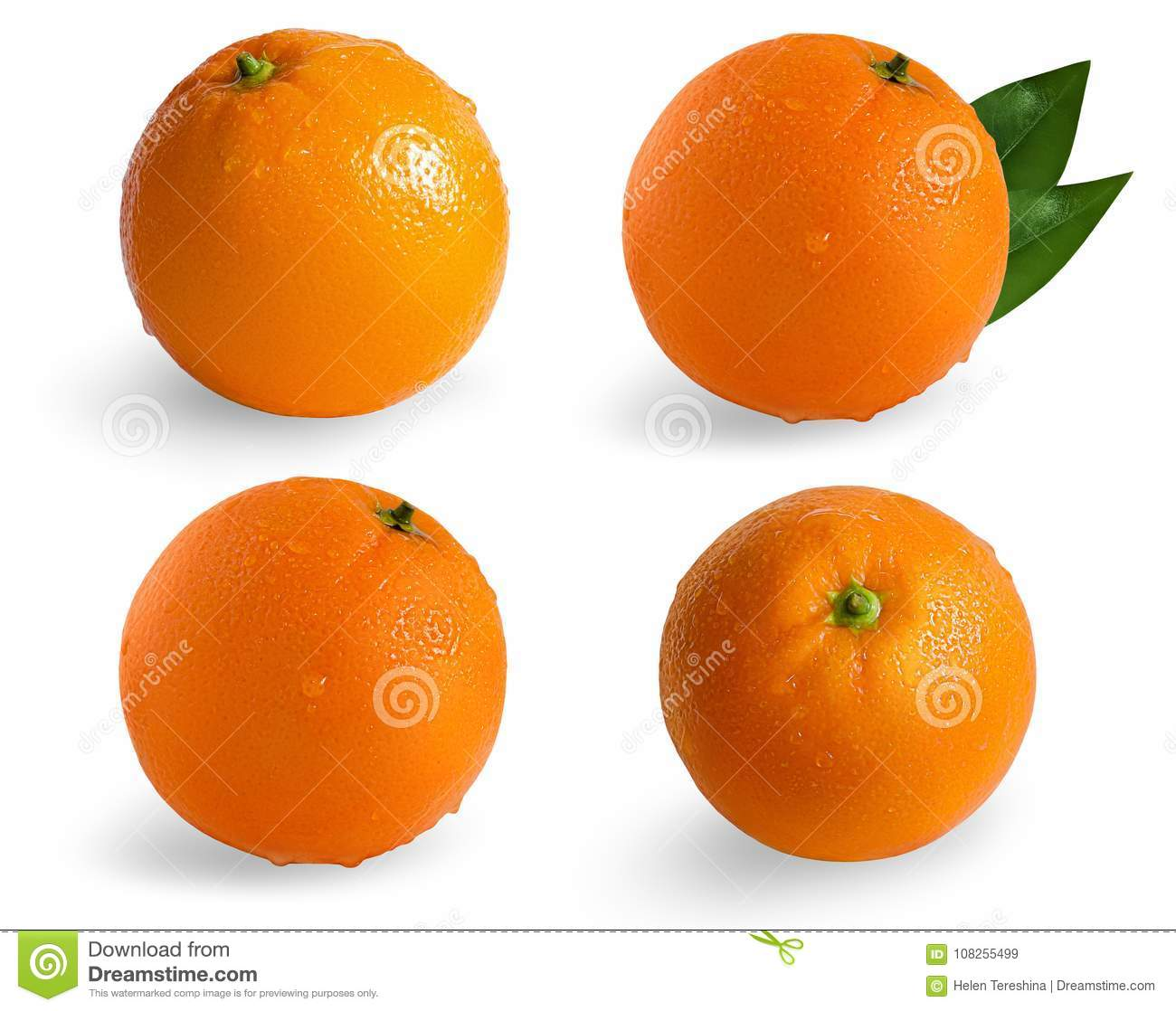 A collection of oranges isolated on white background.Wet orange isolated on white background.