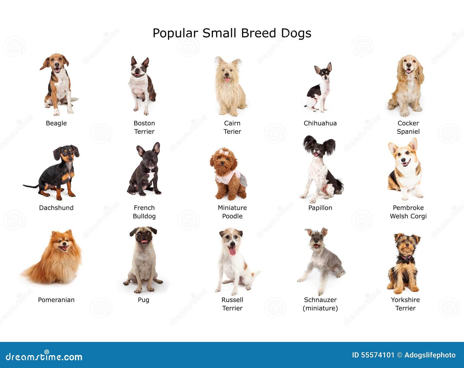 Best Dog Breed Childrens