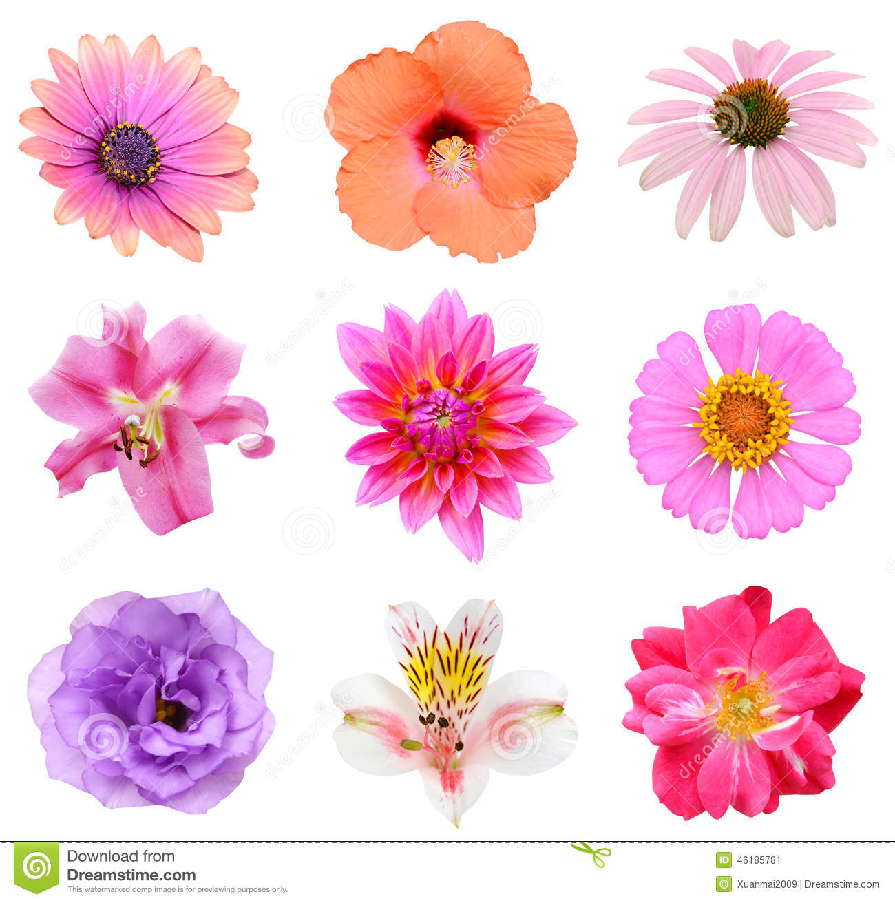 Collection Set Of Flower Heads Stock Photo