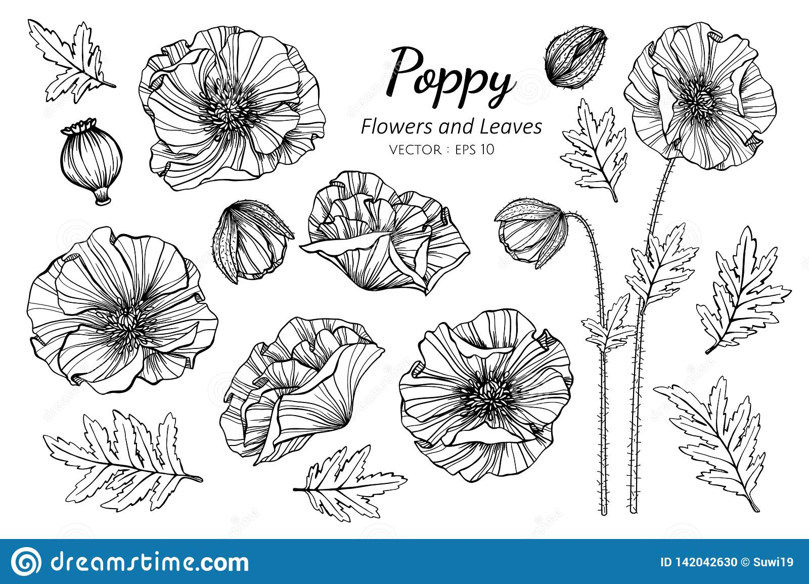 Collection Set Of Poppy Flower And Leaves Drawing Illustration Stock