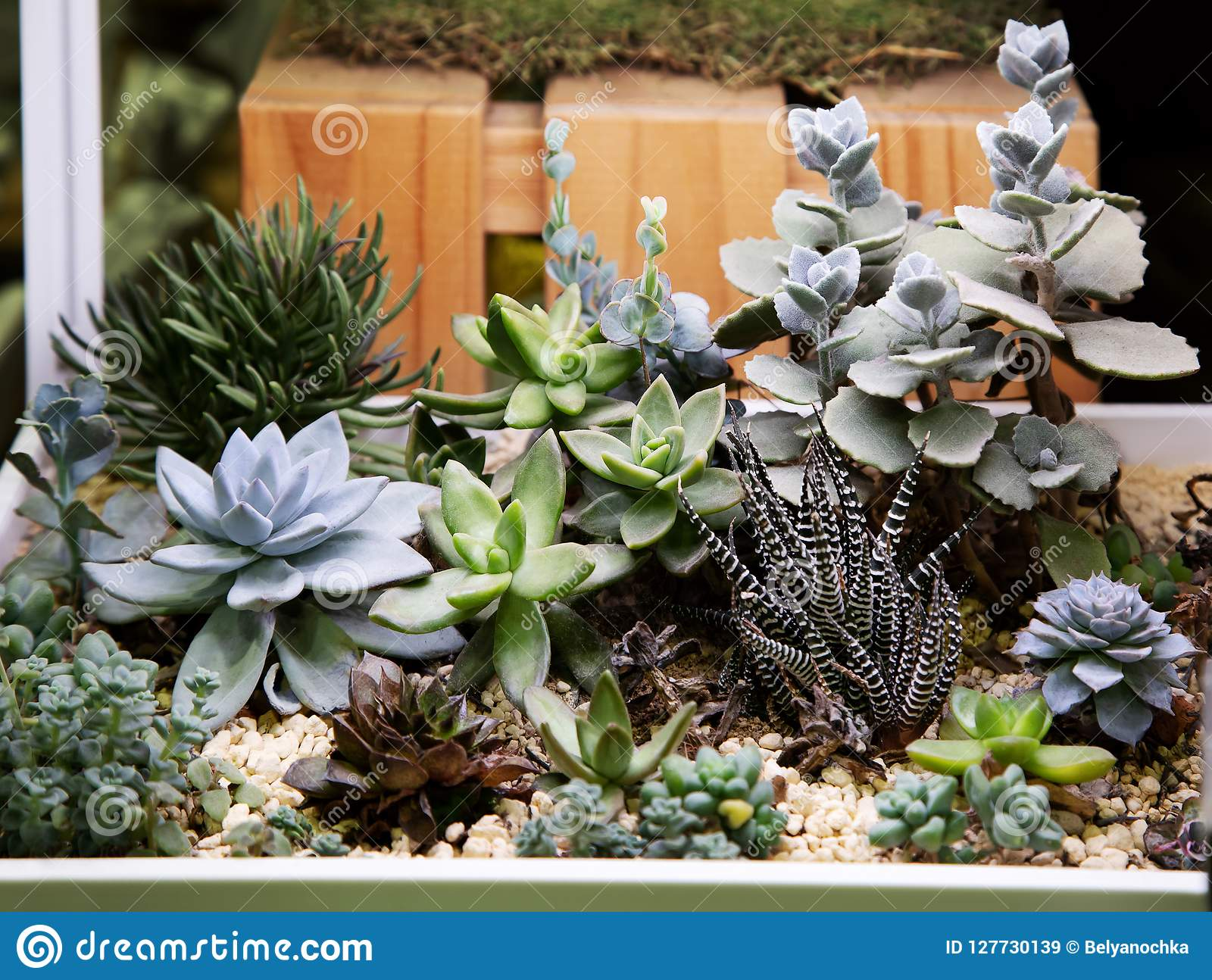Collection Of Small Cactus Succulents In Pot Stock Image Image Of Outdoor Herb 127730139