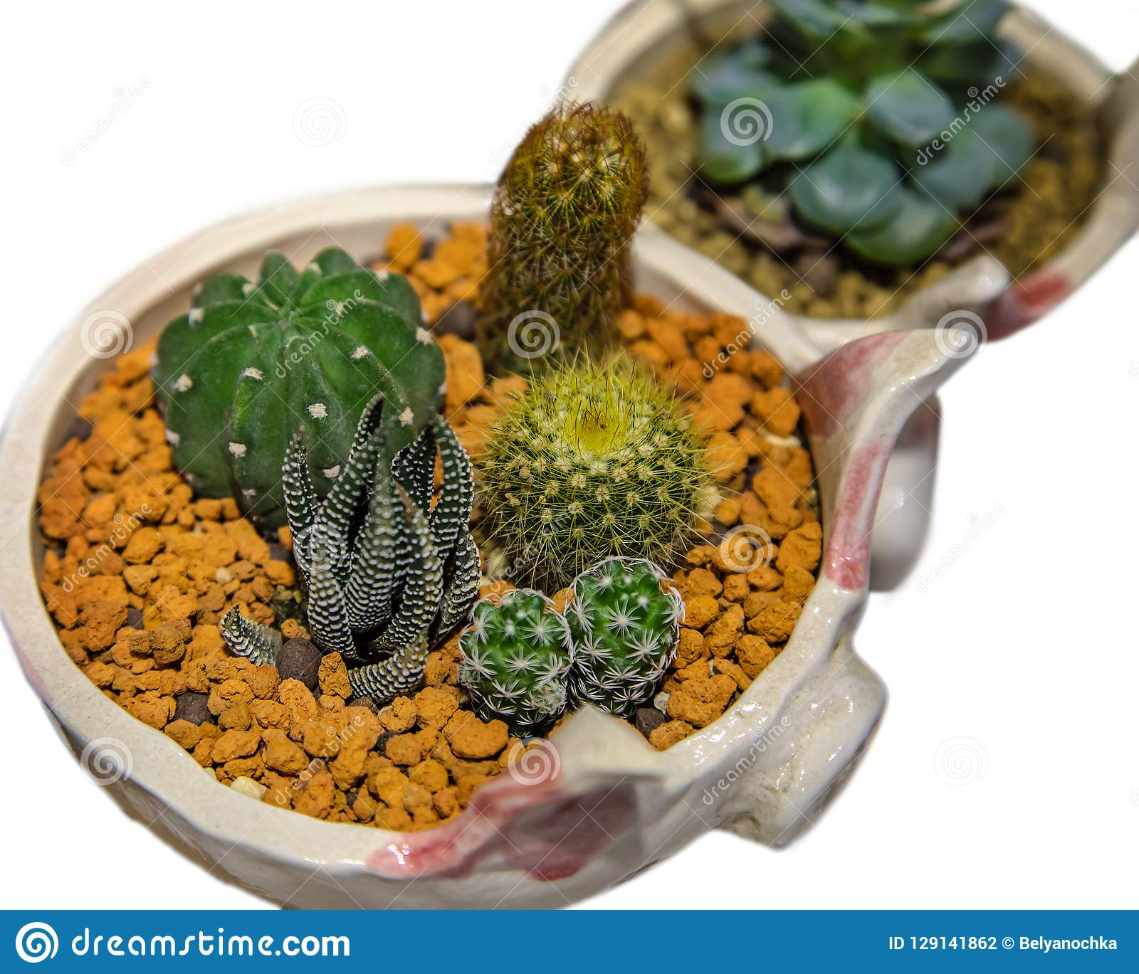 Collection Of Small Cactus Succulents In Pot Stock Photo Image Of Home Design 129141862