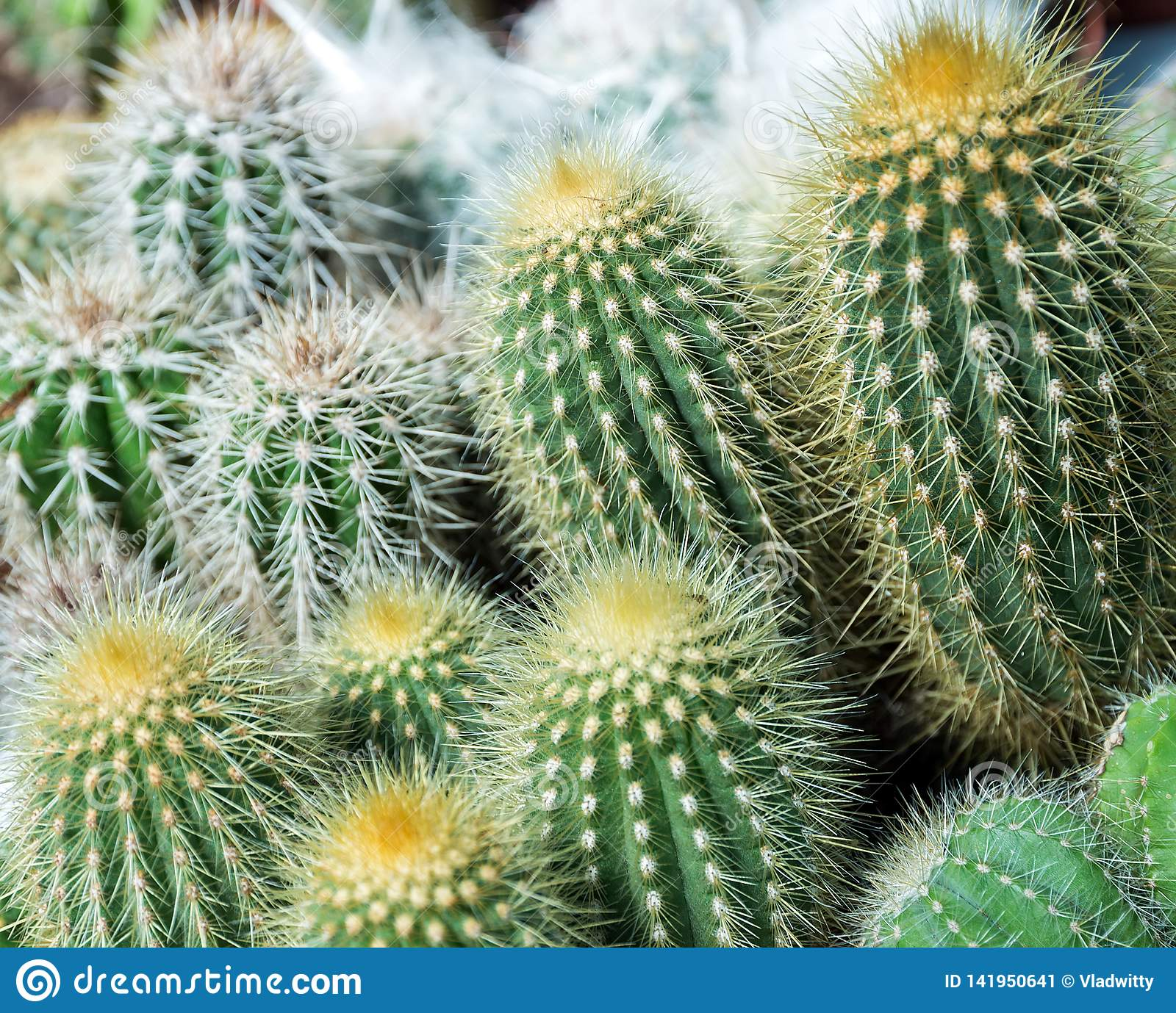 collection in small flowerpots, Cactus top view