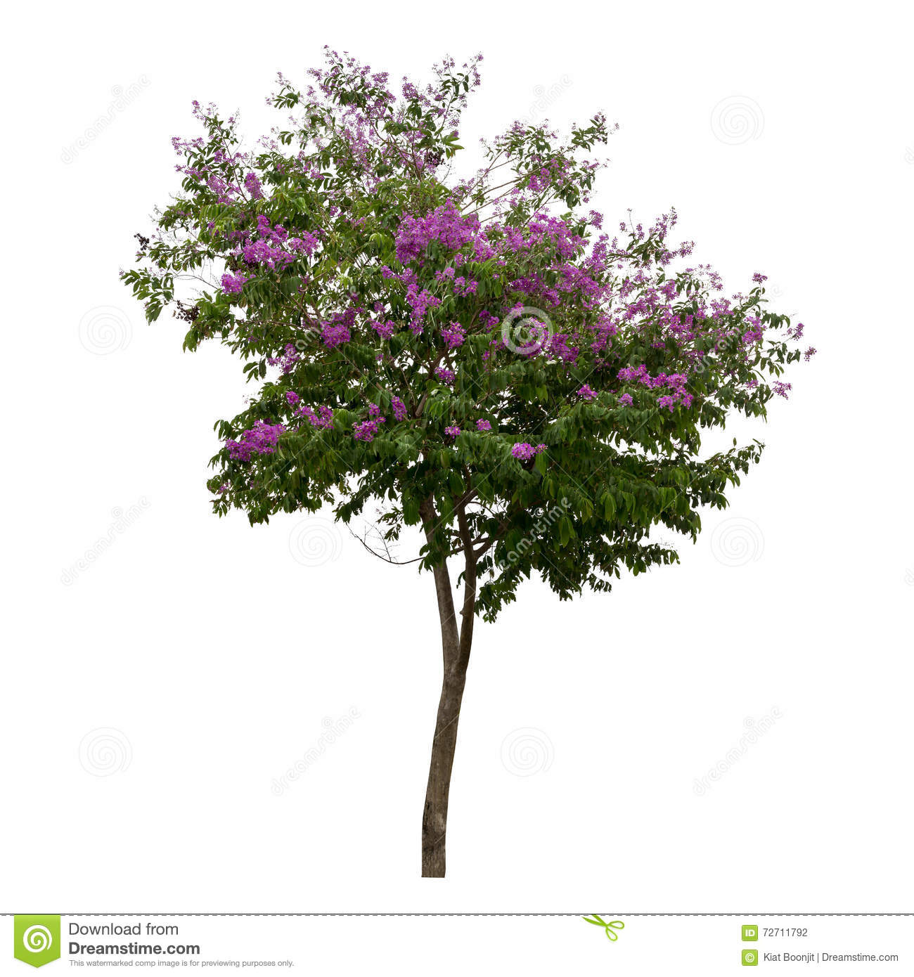 Collection of trees with purple flower isolated on white background collection of trees with purple flower isolated on white background mightylinksfo