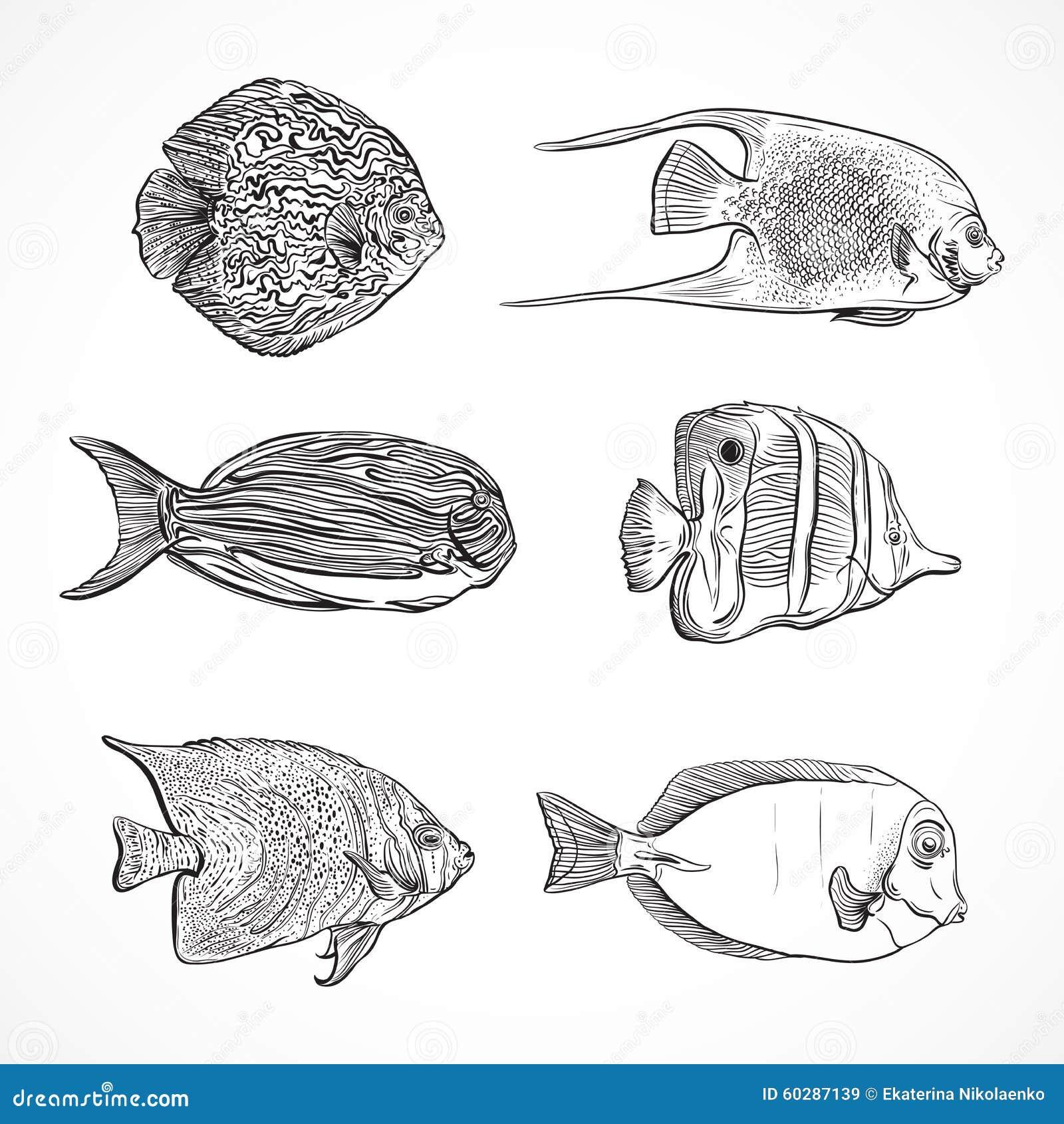 Line Art Vector Illustrator : Collection of tropical fish vintage set hand drawn
