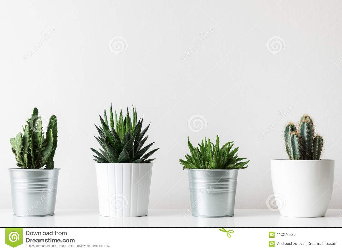 Collection of various cactus and succulent plants in different pots. Potted cactus house plants on white shelf.