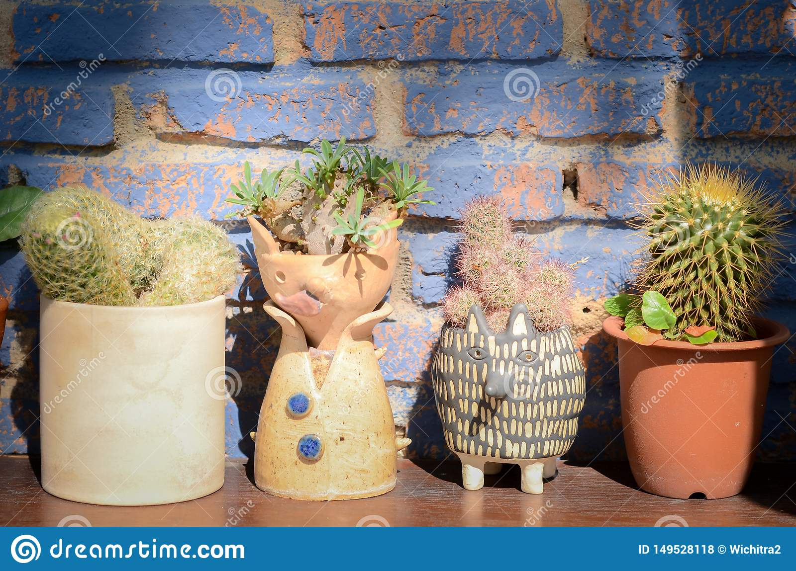 Collection of various cactus and succulent plants in different pots. The rustic interior home decor