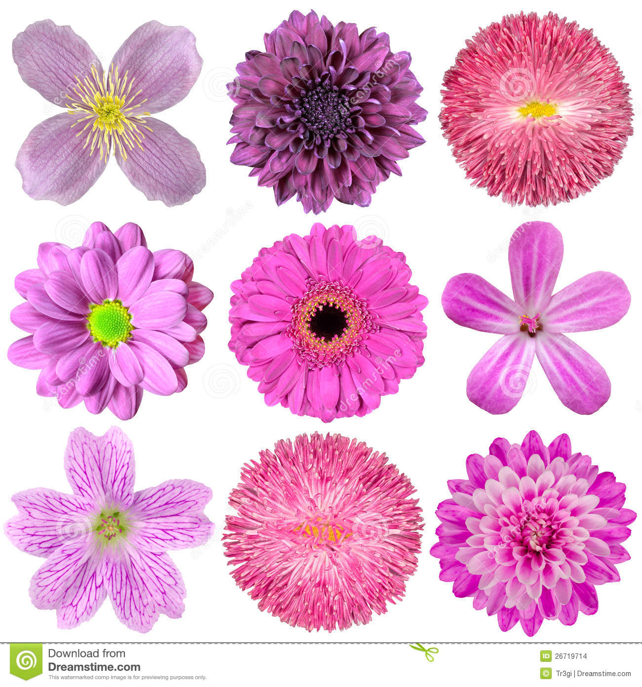 Collection Of Various Pink Purple Red Flowers Stock Photo Image