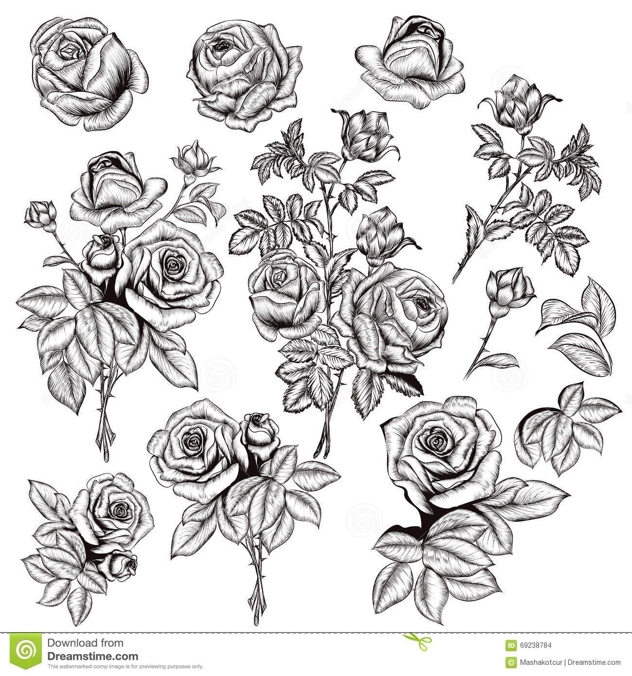 Collection Of Vector Hand Drawn Roses For Design In