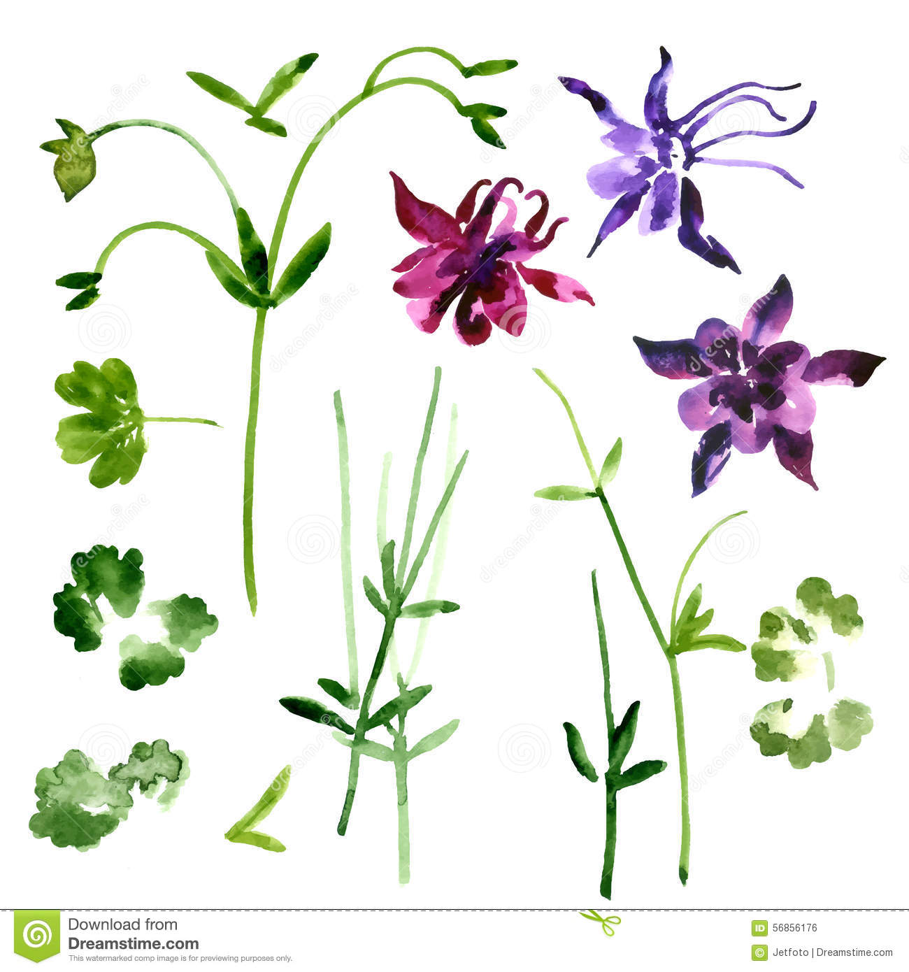 Collection of watercolor aquilegia flowers