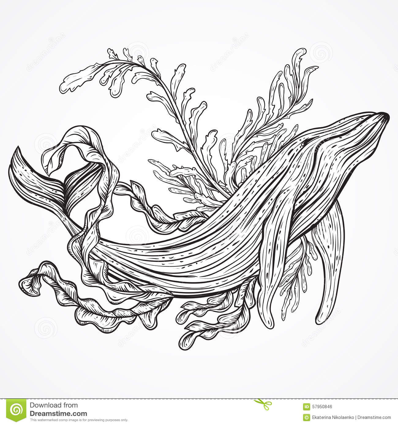 Line Drawing Kelp : Collection of whale marine plants leaves and seaweed
