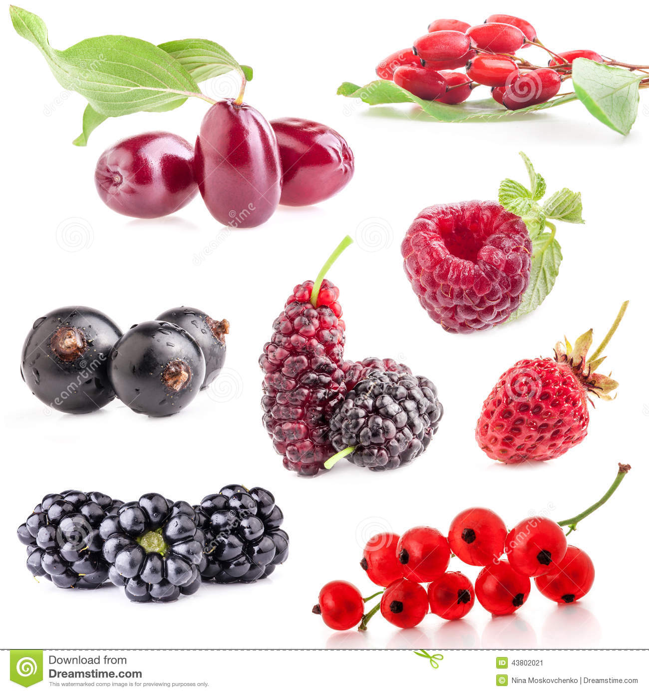 Collections of berry