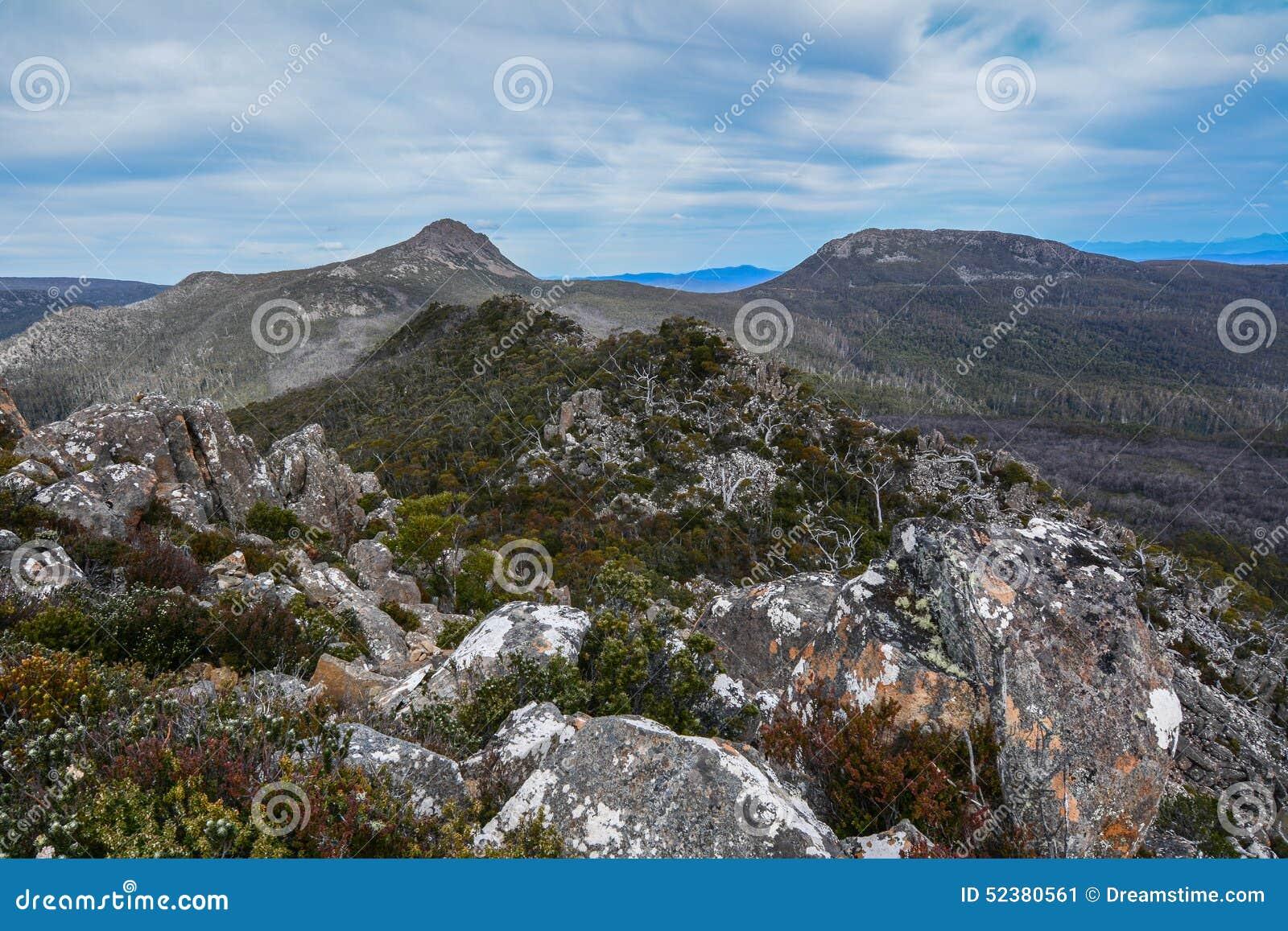 Collin czapeczka Tasmania 2
