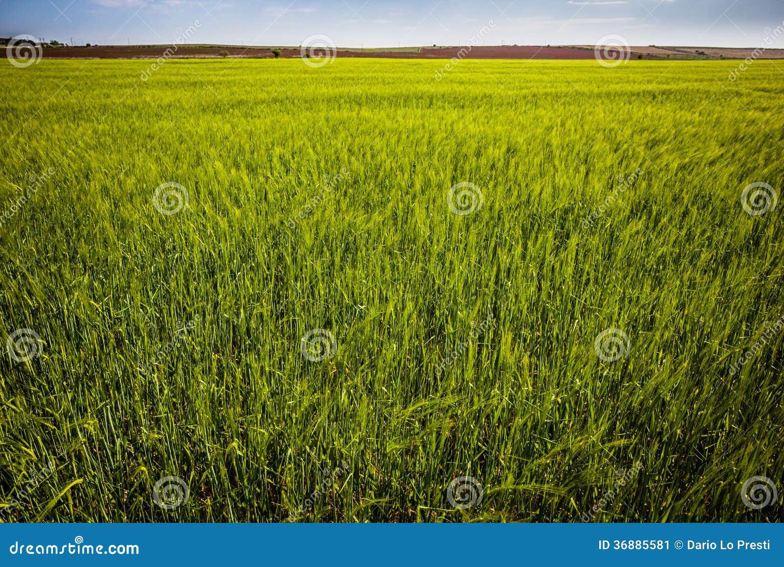 Download Collina verde immagine stock. Immagine di paesaggio, ambiente - 36885581