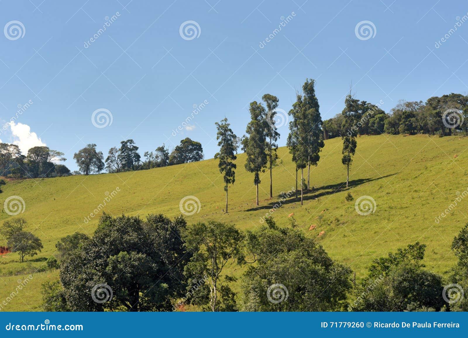 Colline verdi con i pini