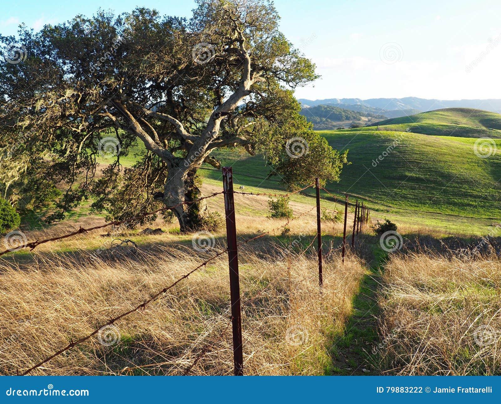 Colline verdi della contea di Sonoma