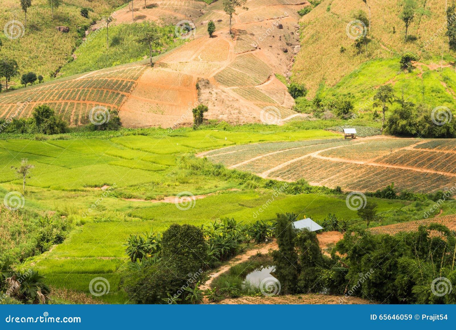 Collines de champ de ferme