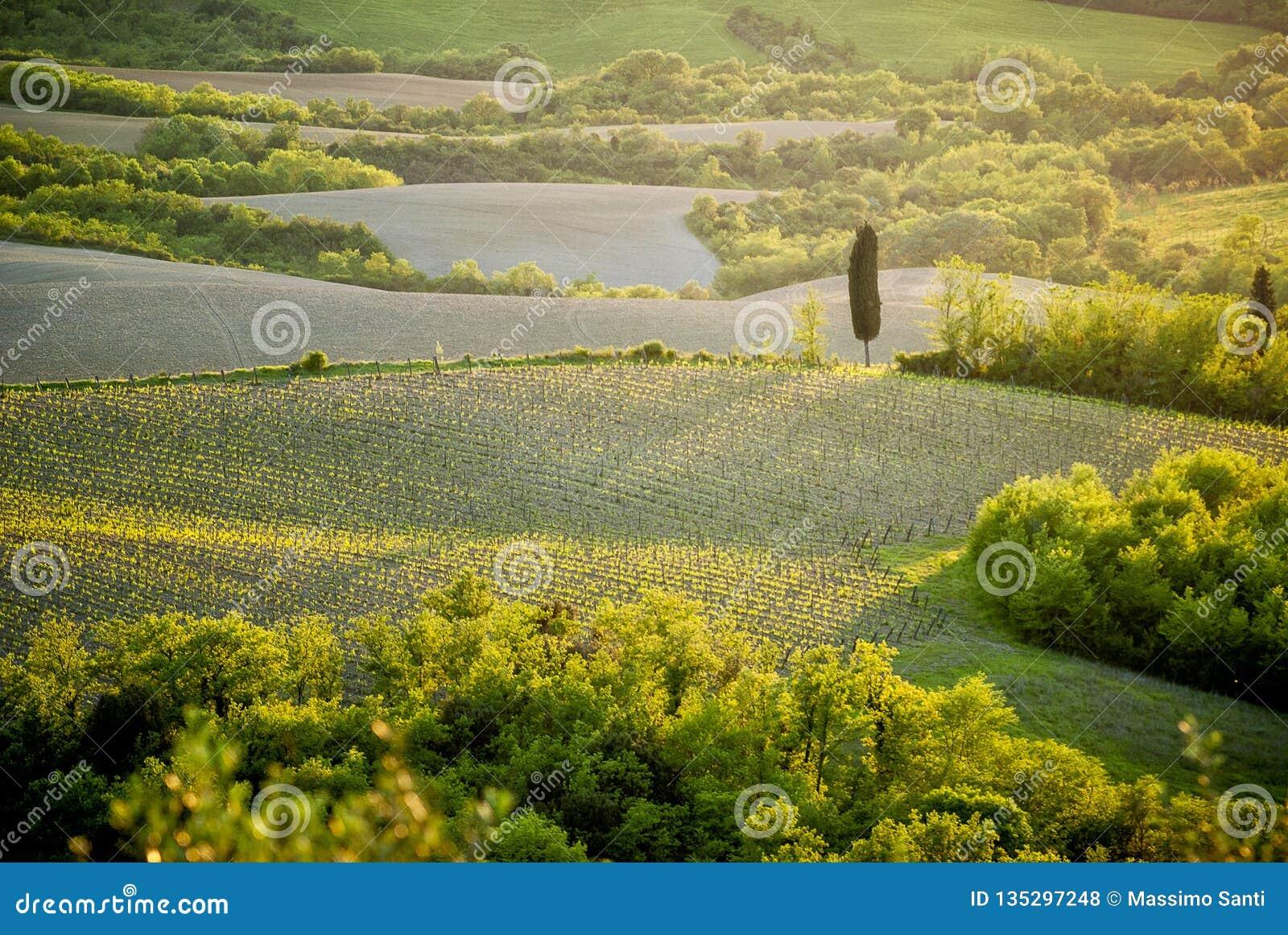 Collines de chianti avec les vignobles et le cyprès Paysage toscan entre Sienne et Florence l Italie