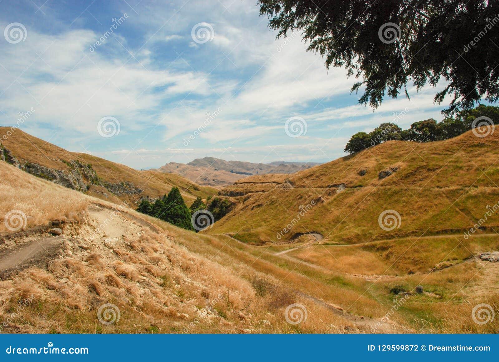 Collines herbeuses dans la baie de Hawkes, Nouvelle-Zélande Collines jaunes d herbe avec des montagnes à l arrière-plan, près des
