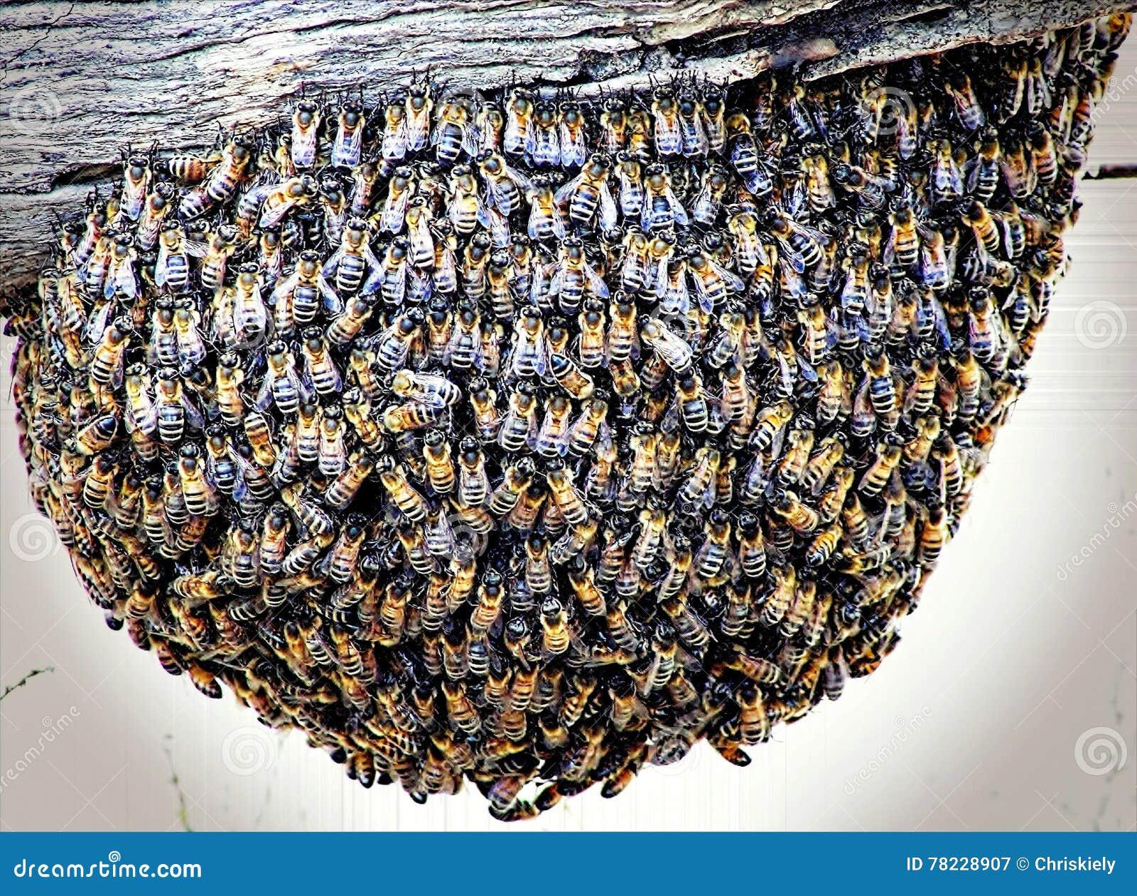 Colmeia da abelha em uma cerca Post
