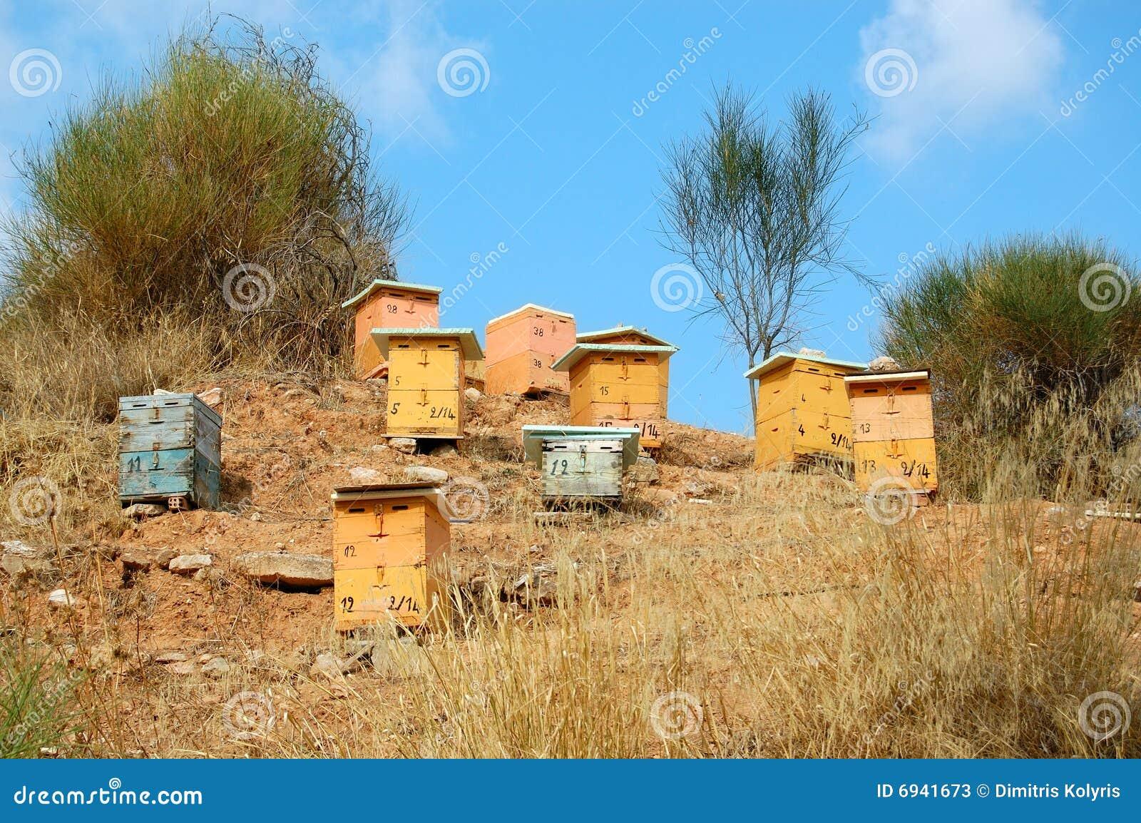 Colmeias De Madeira Fotos de Stock Imagem: 6941673 #0F75BC 1300x954