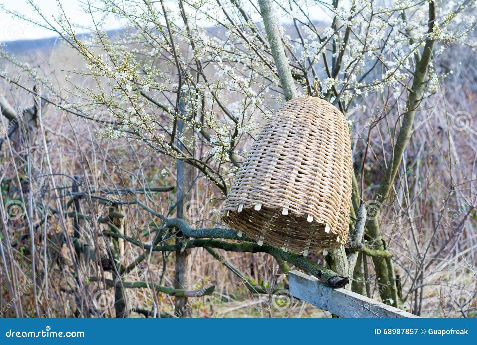 Colmena hecha a mano para capturar los enjambres de la abeja en naturaleza