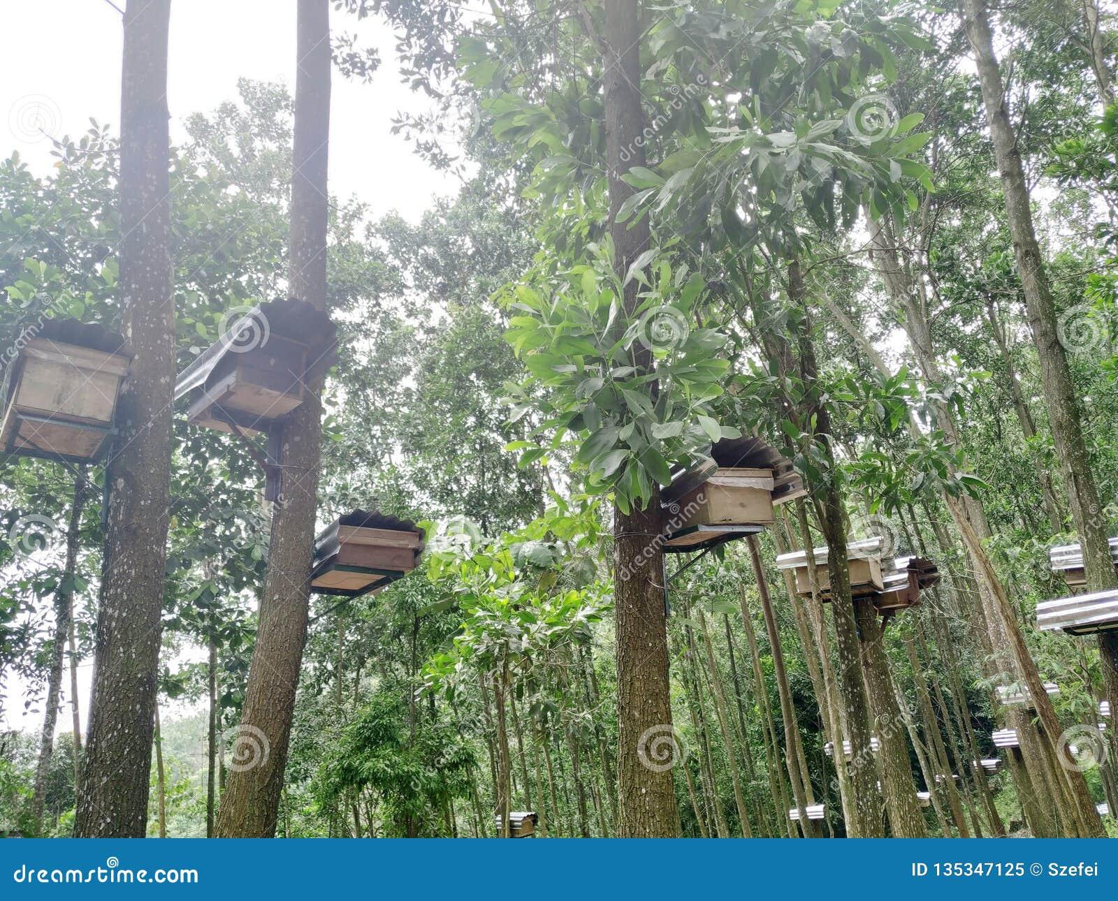 Colmenas de la abeja en bosque