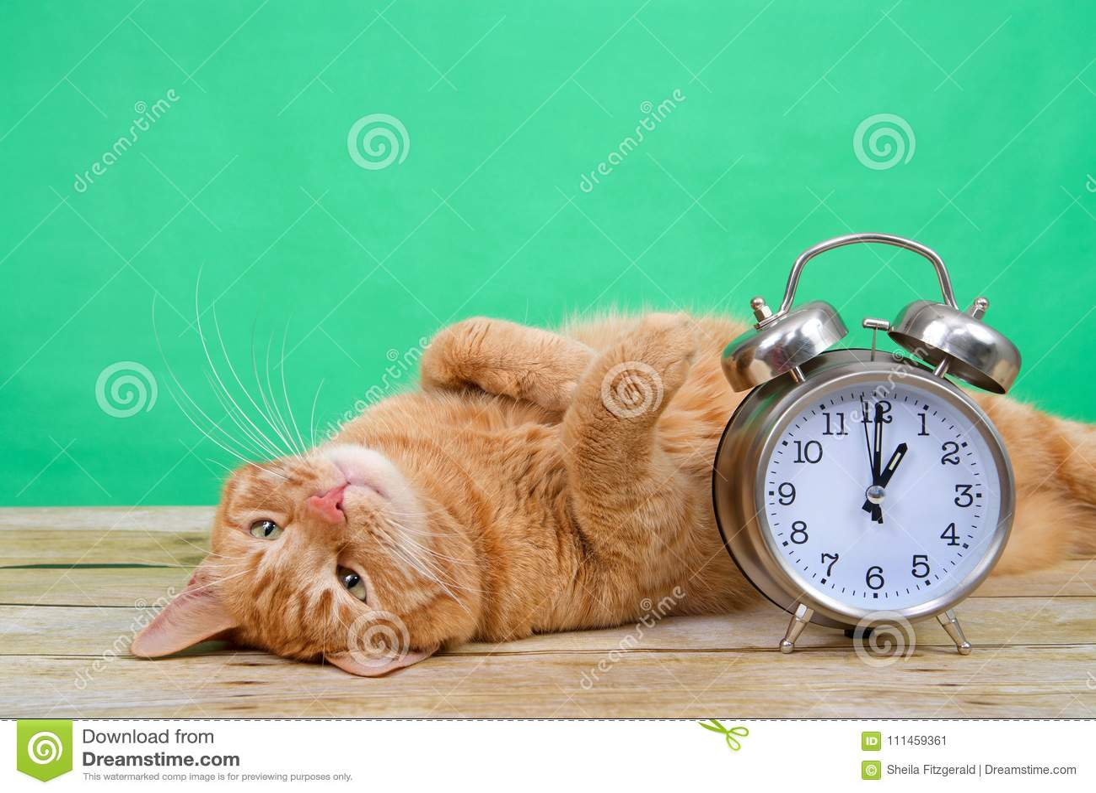 Colocación del gato de gato atigrado del horario de verano al revés