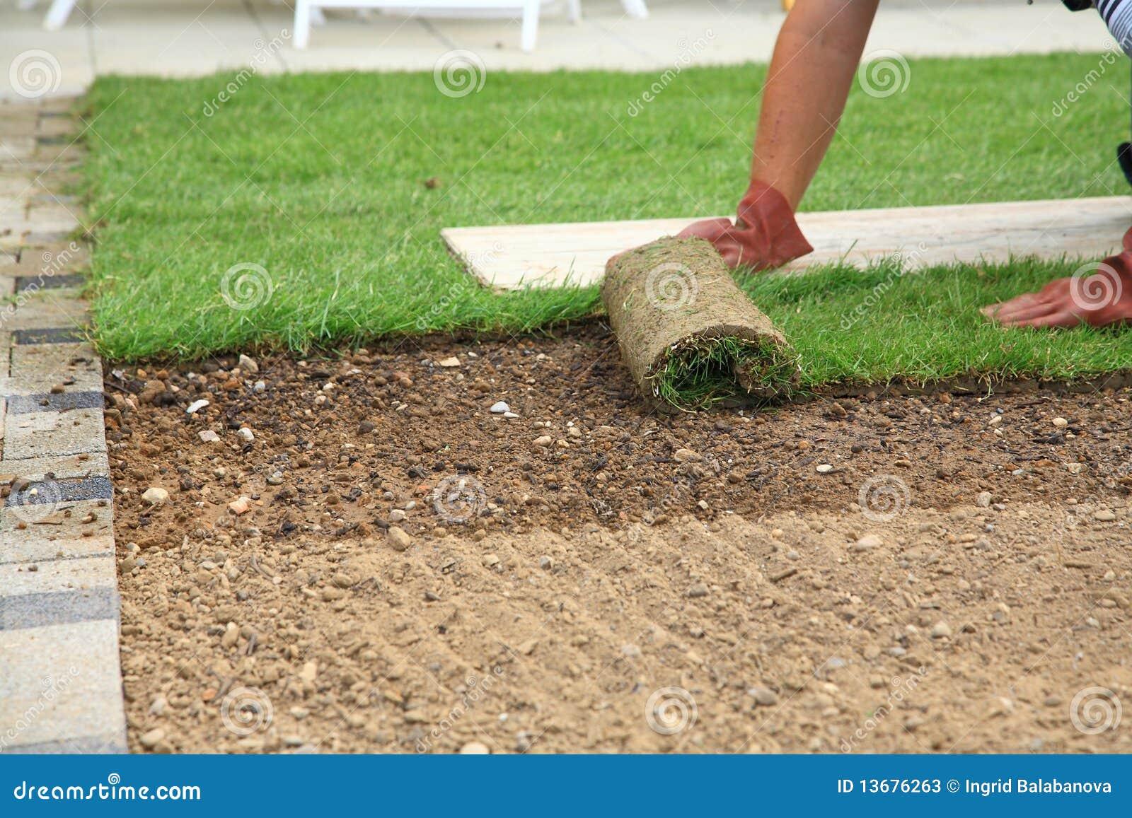 Colocando o sod para o gramado novo