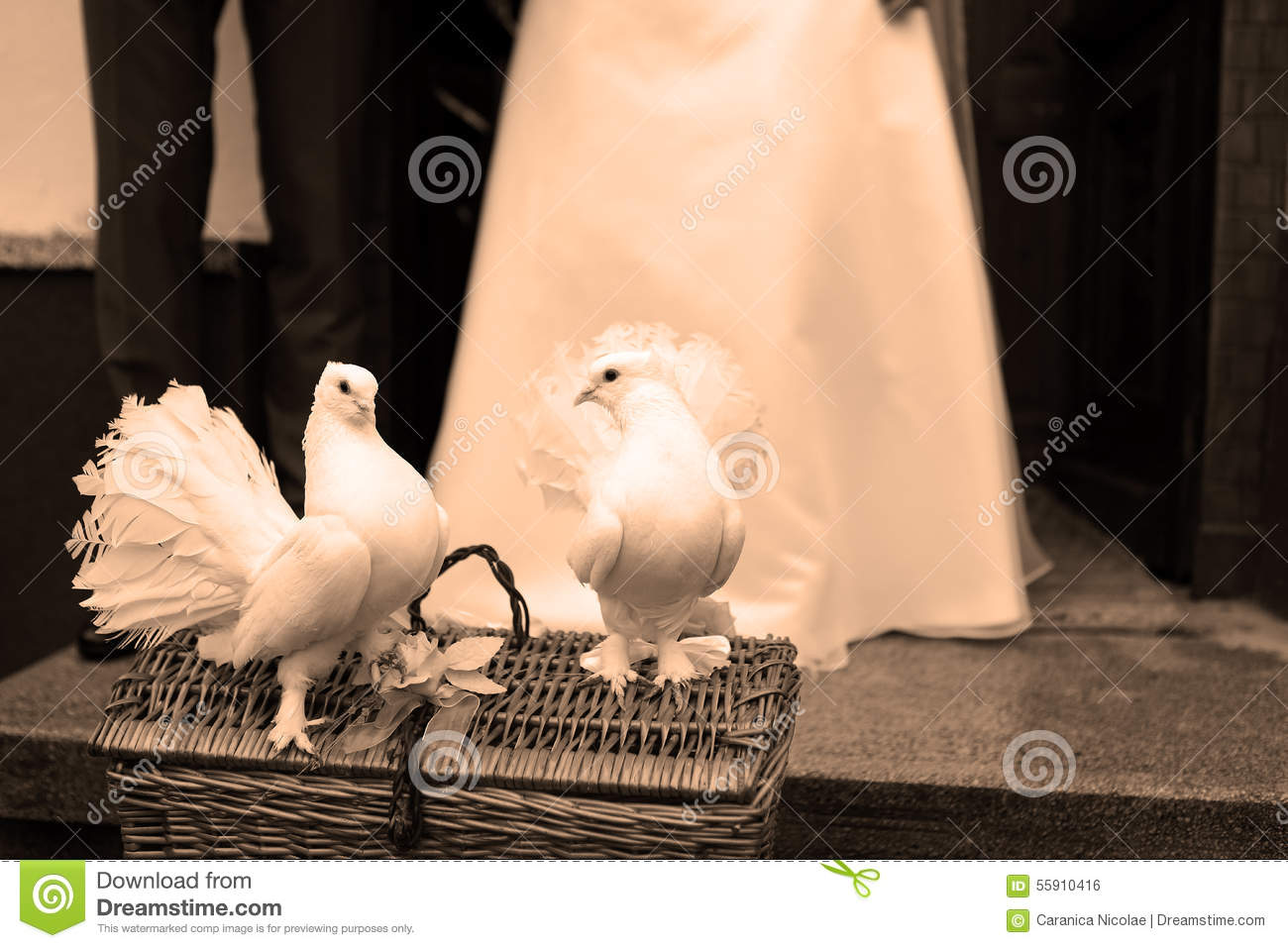colombes blanches et un couple de mariage photo stock image du pigeons amour 55910416. Black Bedroom Furniture Sets. Home Design Ideas