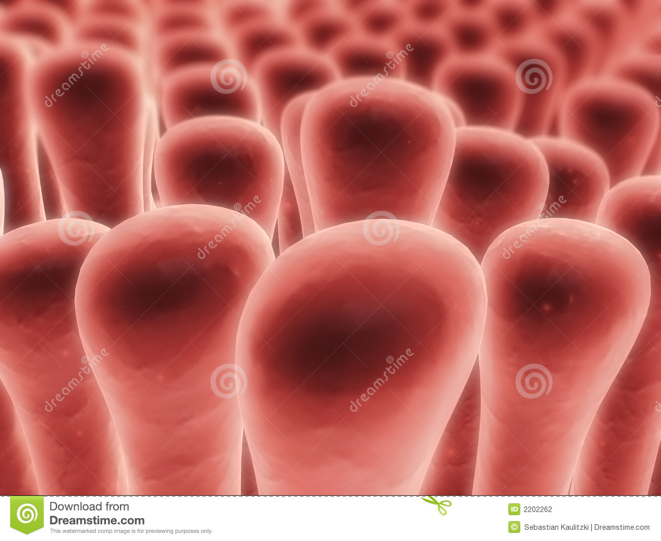 Colon Villi Stock Illustration Illustration Of Microscopy 2202262