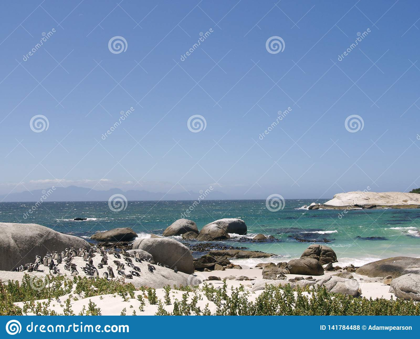 Colony of Penguins at Boulders Beach, Cape Town, South Africa