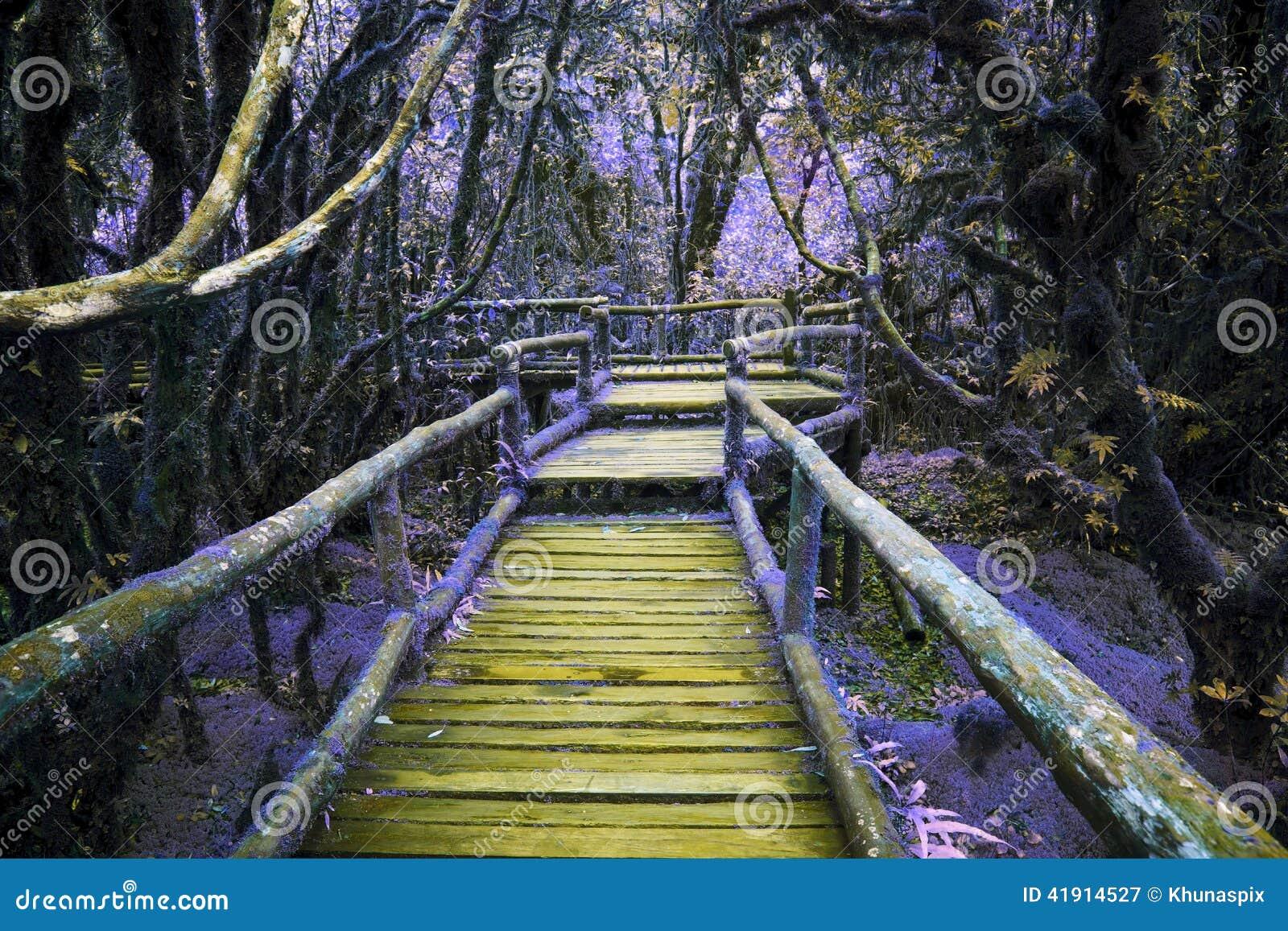 Color abstracto del puente de madera en selva tropical de la colina con la planta de la humedad