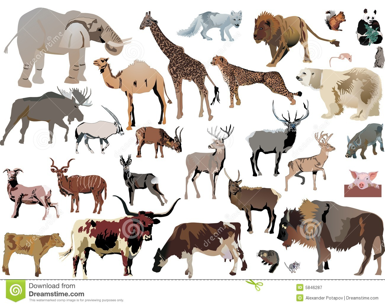 Picture to color of animals - Royalty Free Stock Photo Download Color Animals