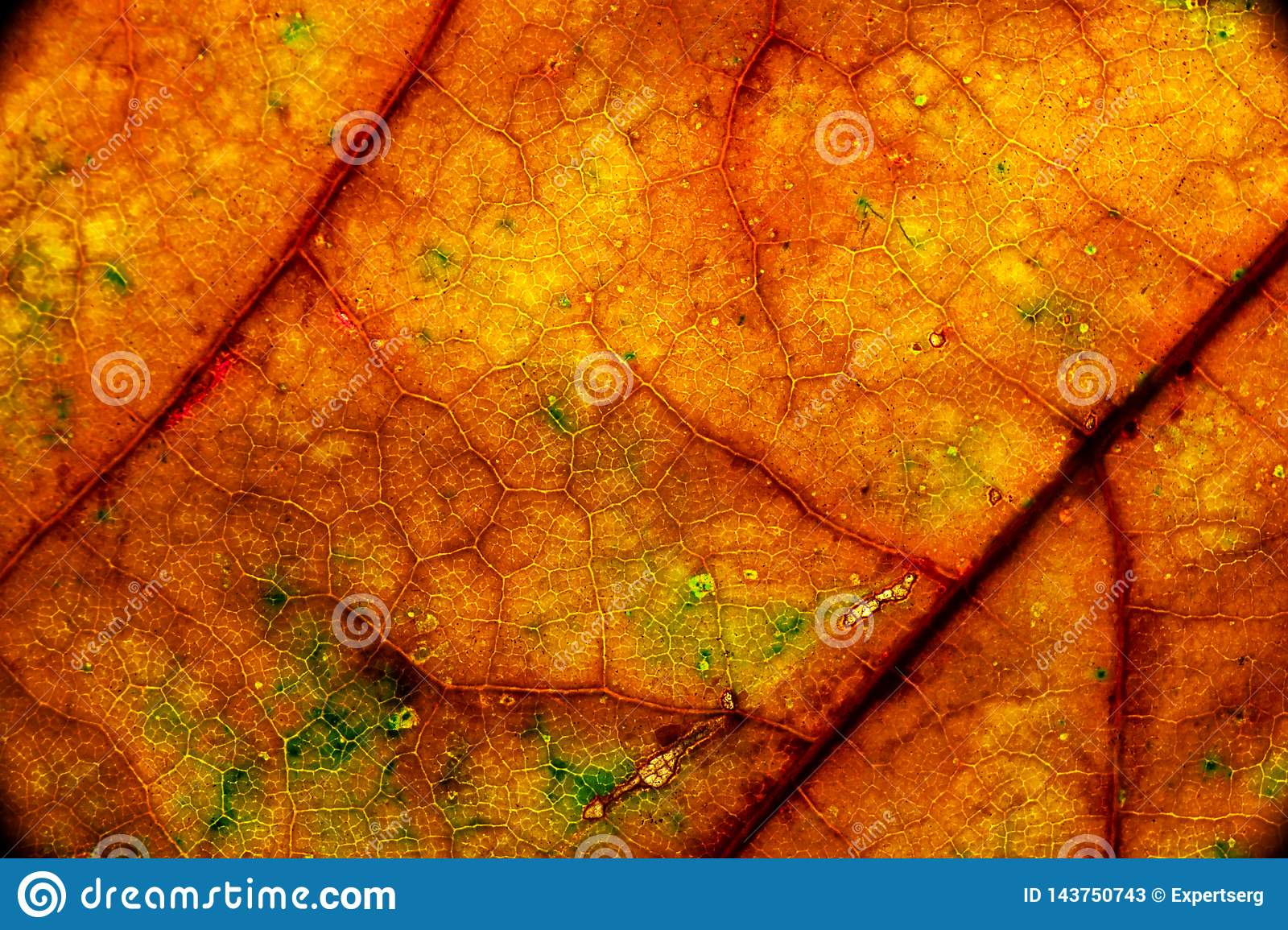 Color autumn leaf green red orange yellow macro