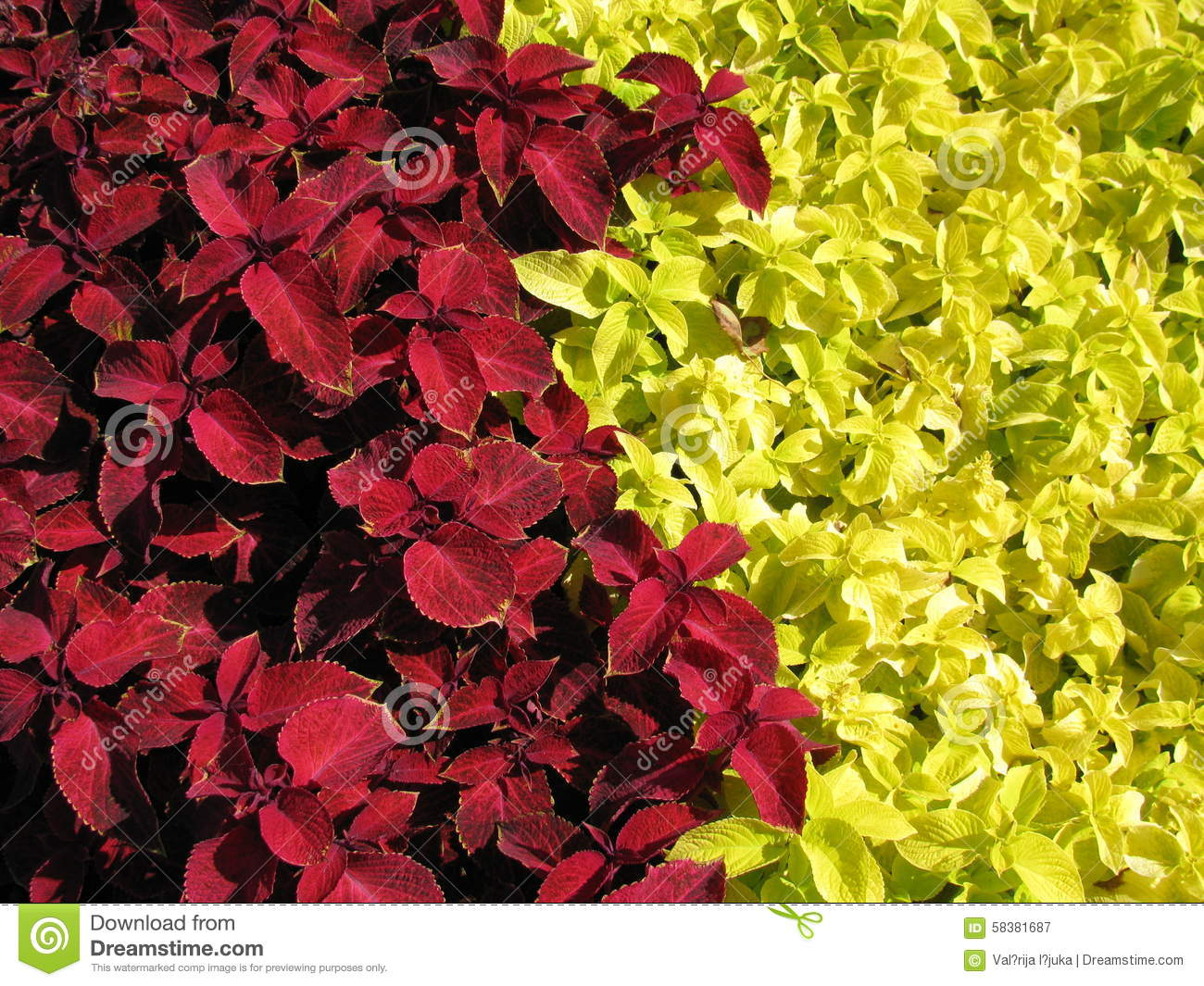 Color contrast from plants red and yellow stock photo - Contrast color with yellow ...